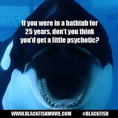 #blackfish you tell em'!! BOYCOTT SEA WORLD AND ALL OTHER PLACES THAT HOLD MARINE LIFE CAPTIVE!!!!