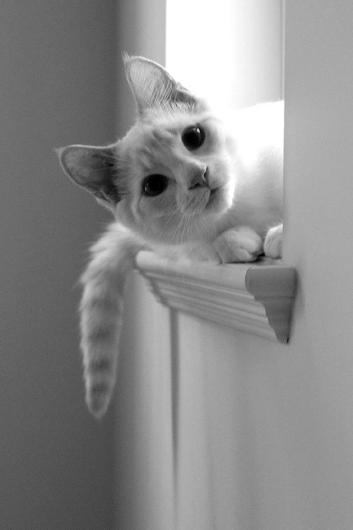 """""""Was that a can opener?  Do I smell... TUNA?"""""""