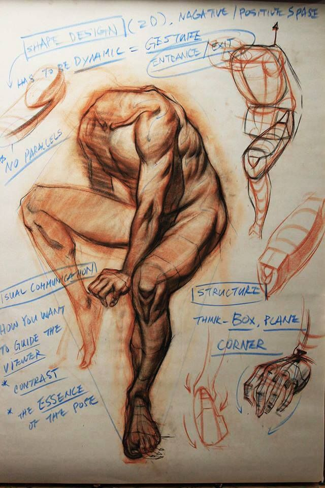 Pin By Wishy Nova On Art References Drawings Figure Drawing Anatomy