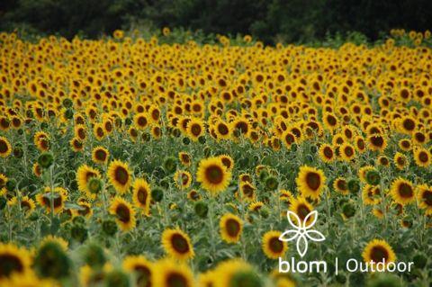 Welkom to BLOMLIFE.COM