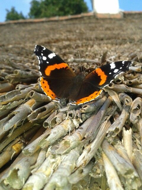 Butterfly on our roof  ♡