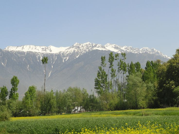 A riot of colors, spring in #kashmir | #travel  http://www.travelopulentbox.com/ghostwriter/2014/06/guest-post-a-journey-to-kashmir-in-summer-india-by-tanveer-badyari/