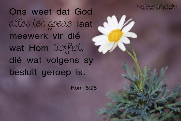 Dag 56 Bybelvers: Romeine 8:28 Ons weet dat God alles ten goede laat meewerk vir dié wat Hom liefhet, dié wat volgens sy besluit geroep is.