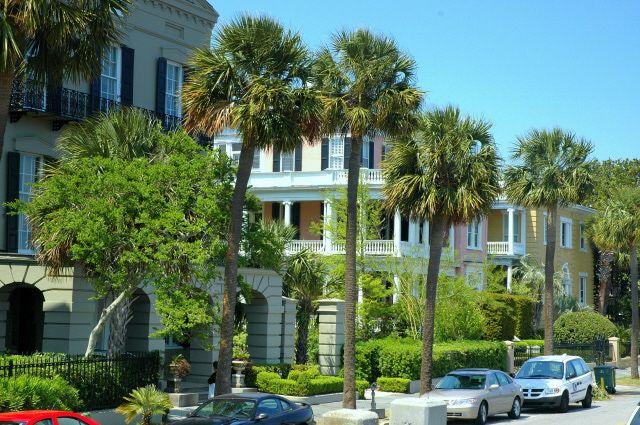 Sabal Palmettos on Charleston Street - Photo by Steve Nix