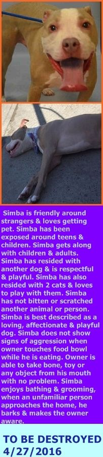 SAFE 4-28-2016 by For The Love of Dog - Rottweiler Rescue of NH --- Brooklyn Center – P  My name is SIMBA. My Animal ID # is A1070087. I am a neutered male tan and white am pit bull ter mix. The shelter thinks I am about 3 YEARS old.  I came in the shelter as a OWNER SUR on 04/12/2016 from NY 11420, owner surrender reason stated was MOVE2PRIVA. http://nycdogs.urgentpodr.org/simba-a1070087/