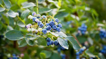 Ako kombinovať ovocné stromy a kry? Pamätajte na ich nároky