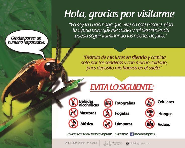 Santuario de las Luciérnagas en Tlaxcala - Temporada 2016 | Turismo Tlaxcala
