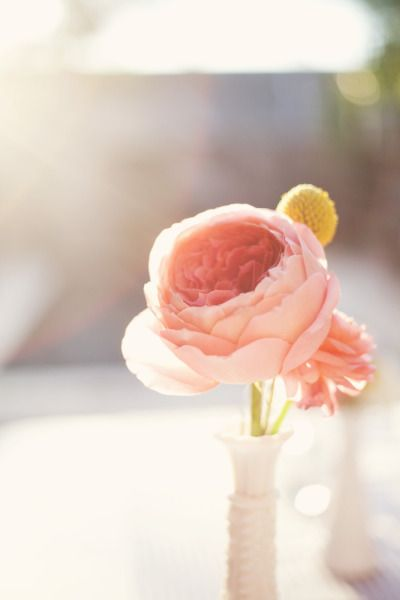 English tea rose- Photography by mailelaniphotography.com