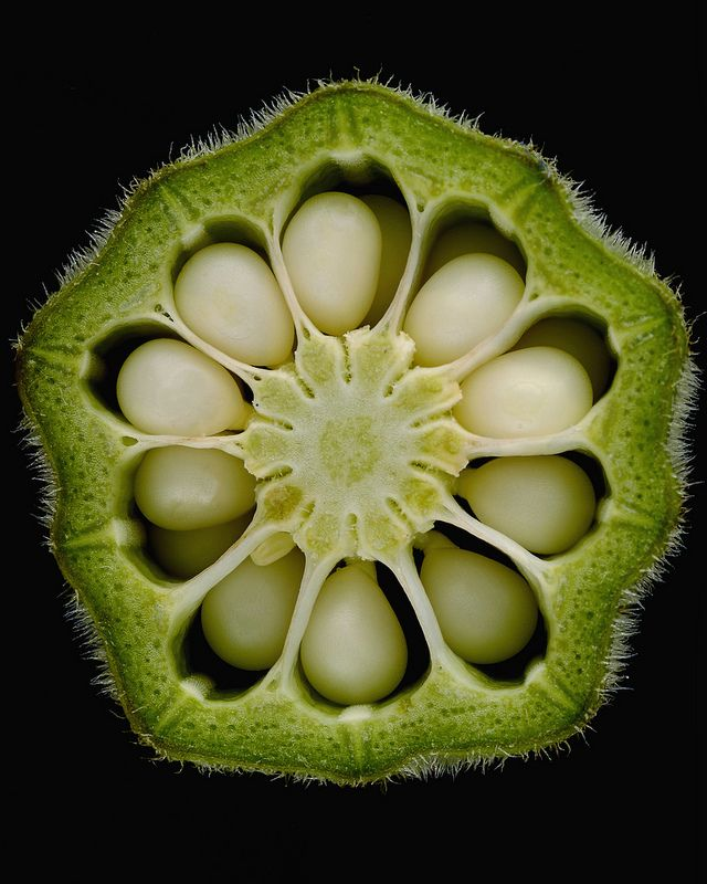 Find interesting seed formations in fruits (such as this Okra) to look at closely and sketch in Garden Journals. They can also be used for stamping!