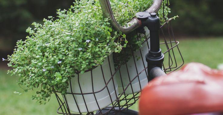 Rower z kwiatami/ziołami - inspircje. #flowers #flowerpot #herbs #hydrobox #hydroboxpl #ideas #diy #vintage #bike #rower #bicycle #flowerpot #doniczki #donice #inspirations #diy