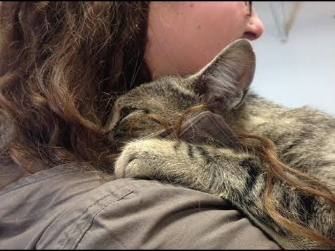 Shelter Cat Gives Volunteer The Biggest Hug Ever and Won't Let Go... - YouTube
