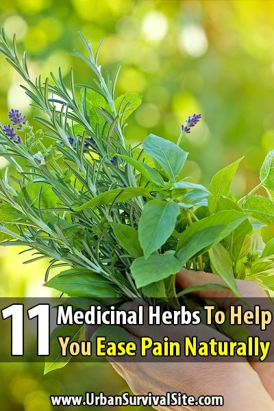 These medicine herbs are natural painkillers. There's nothing as strong as Vicodin on this list, but they can at least make the pain more tolerable.