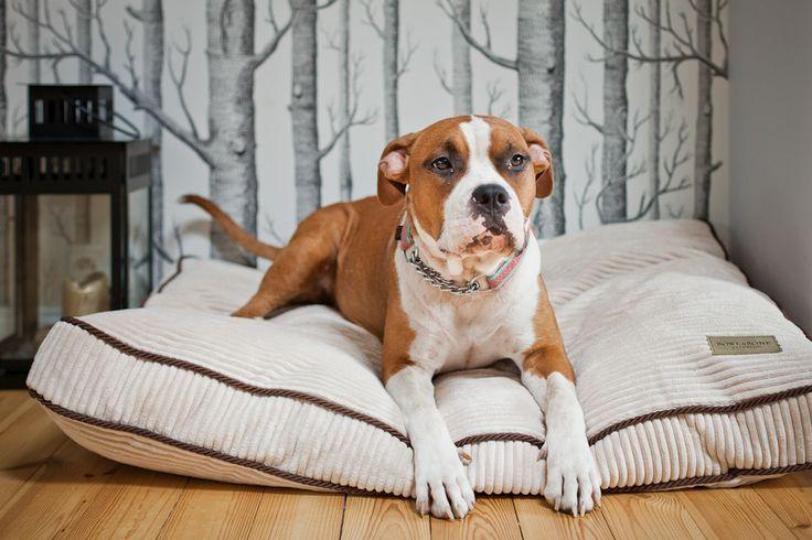 ręcznie robione stylowe legowisko dla dużych psów Amber / kremowe ze sztruksu http://www.animalpresent.pl/