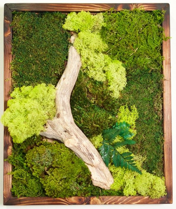 """Small Moss wall art from wabimoss. 18"""" x 18"""". This beautiful work includes driftwood and japanese fire treatment on the frame."""