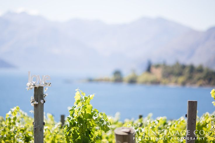 Love in the vines at Rippon