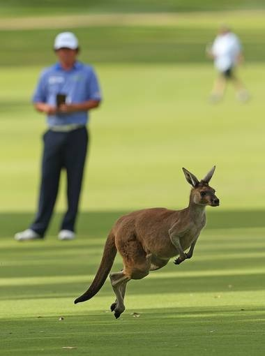 A kangaroo is pictured on the 15th fairway as Jason Dufner of the USA waits to take his second shot during round four of the Perth International at Lake Karrinyup Country Club in Perth, Australia.   Paul Kane, Getty Images