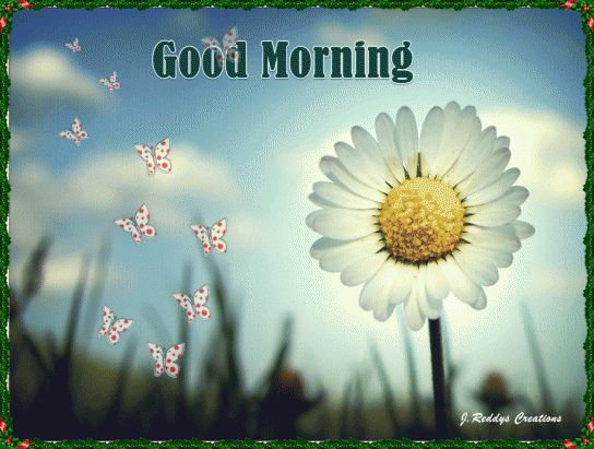 We have sorted top 20 quotes with pictures to say good morning friends have a nice day. Description from amusingfun.com. I searched for this on bing.com/images