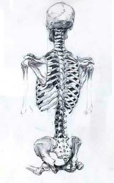 39 Best Skeleton Poses Images On Pinterest