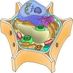 34 best make cells images on pinterest