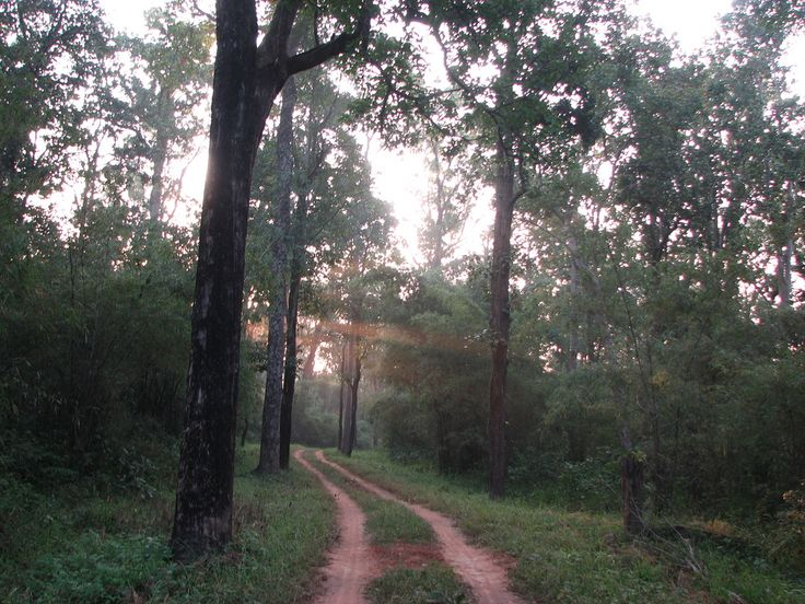 First rays of the sun entered the jungle @Kanha forest | by anirbanbose