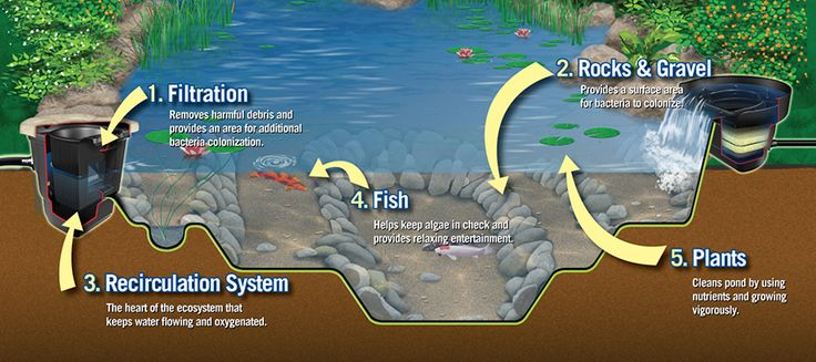 Importance of Ecosystem Pond - the right balance of fish, plants, circulation, filtration, rocks and gravel.