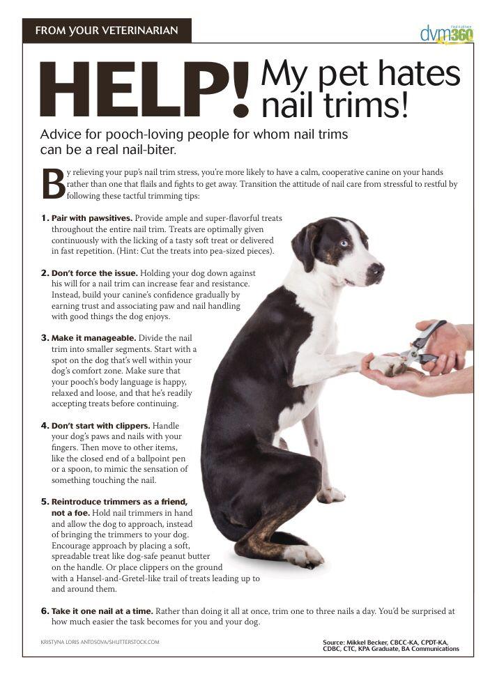 Help My Pet Hates Nail Trims Dvm360 Vet Medicine Animal Hospital Trim Nails