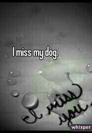 Image result for pet loss quotes
