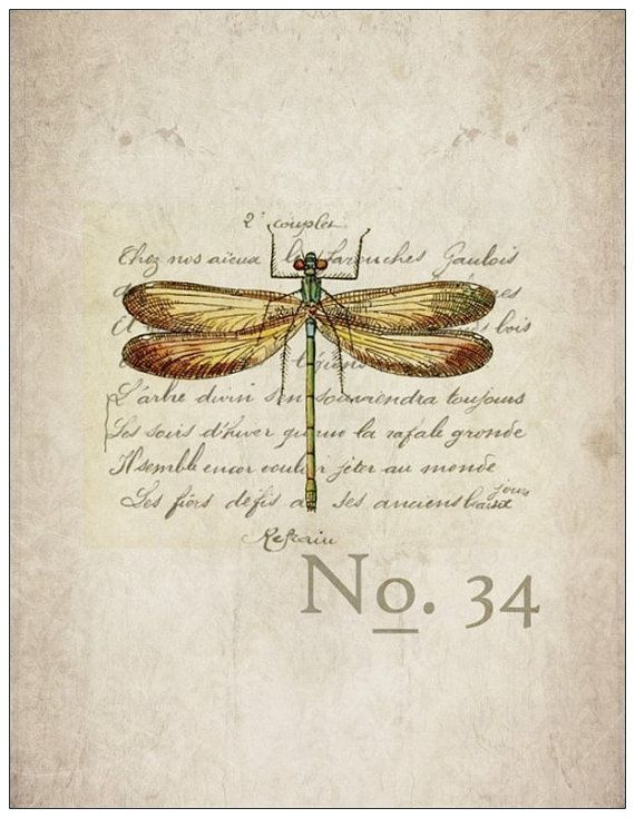 """Items similar to set of 4 flat notecards with envelopes - """"scientific dragonfly"""" on Etsy"""