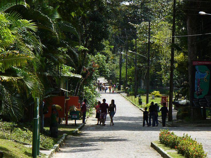 """""""Zoo Parque Dois Irmãos"""". #Recife. Estado de Pernambuco, Brasil."""