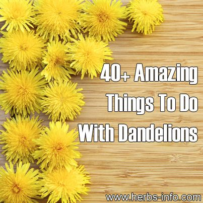 40 Amazing Things To Do With Dandelions ►► http://www.herbs-info.com/blog/40-amazing-things-to-do-with-dandelions/?i=p