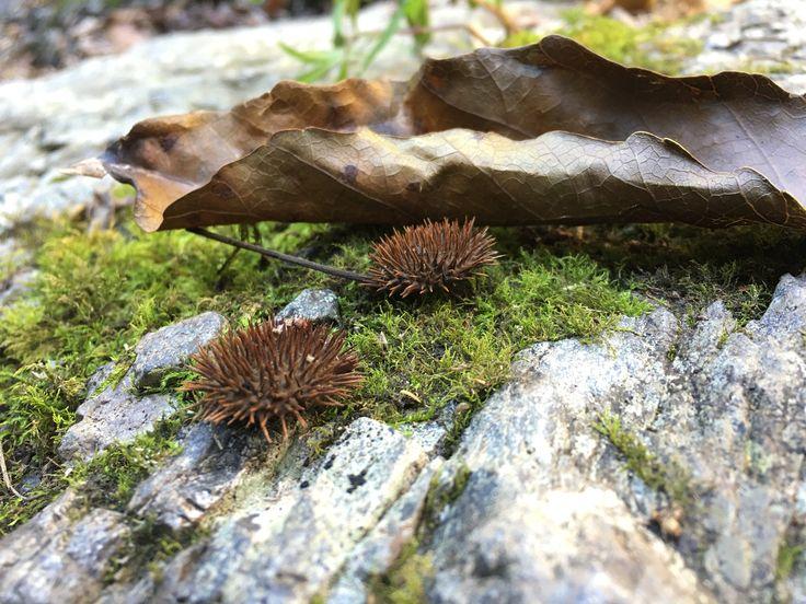 Bush Walk #4 Cedar Creek