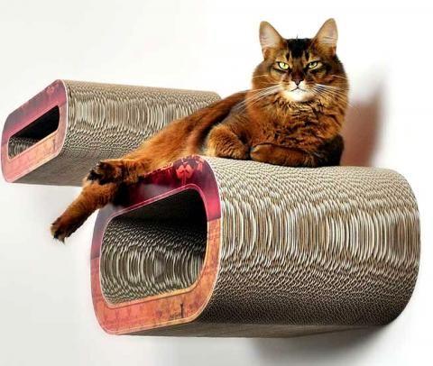 Wie man mit Katze stilvoll wohnt | Schöner Wohnen