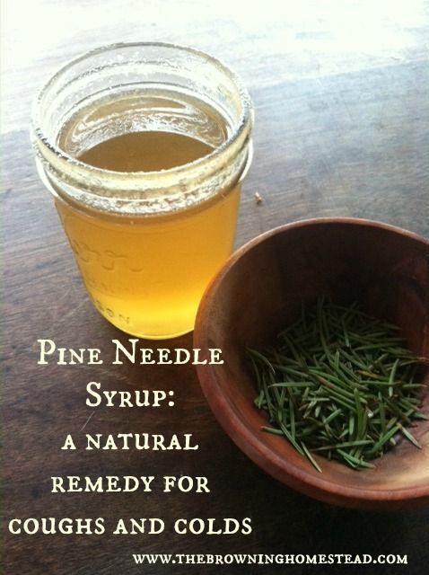 Pine needles are loaded with vitamin C. Here's how to create a natural syrup to combat coughs and colds.