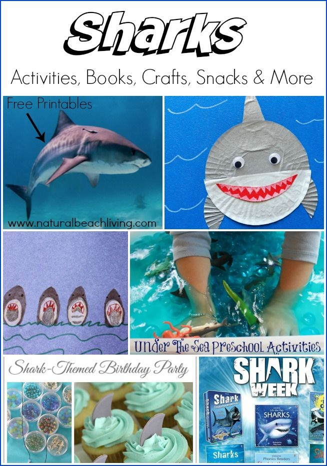 1000 images about homeschool land and ocean animals on for Bill engvall dork fish
