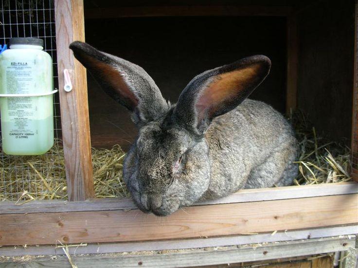 237 Best Images About Rabbits On Pinterest Rabbit Cages