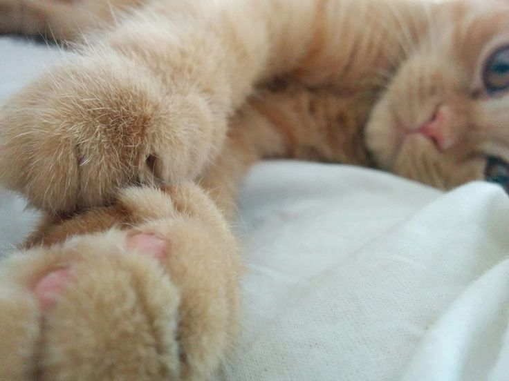 21 Best Cute Cat Wallpaper Images On Pinterest