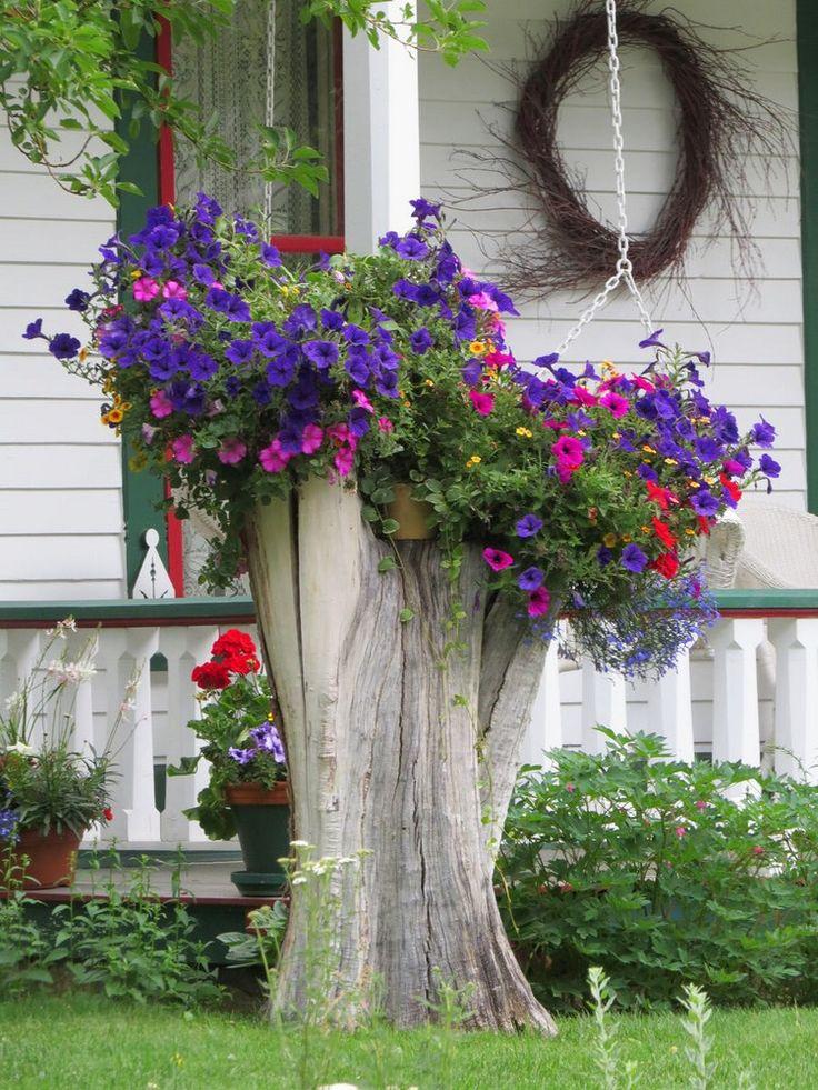 jardin d'ornement - tronc d'arbre décoré de suspensions de pétunias violets et roses