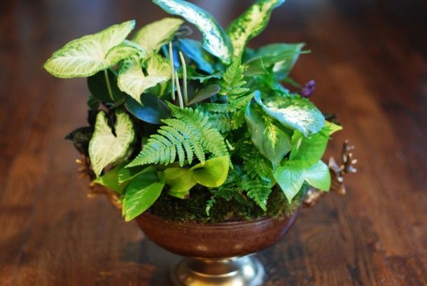 Common Houseplants | ... – Breathe a little easier- common house plants that purify the air