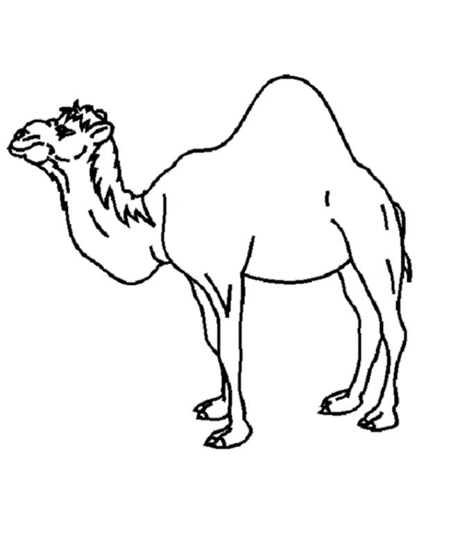 Camels Strong Coloring Pages For Kids Printable