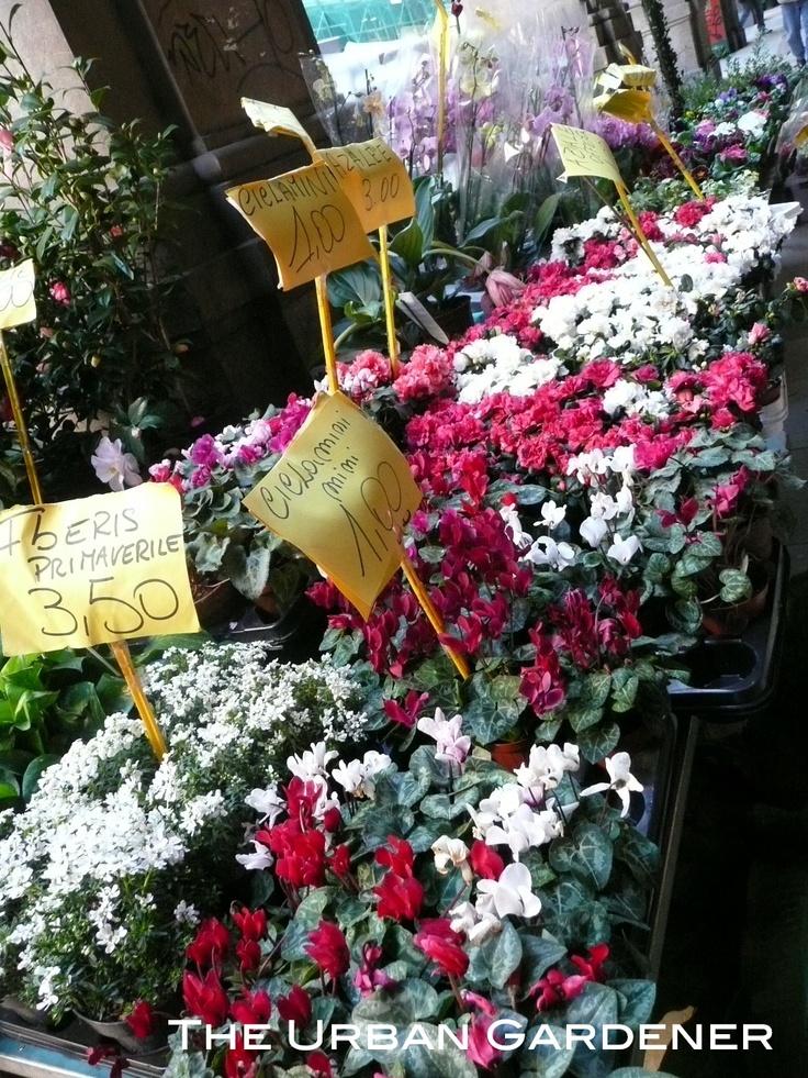 98 best garden shops images on pinterest florists floral shops and flower market. Black Bedroom Furniture Sets. Home Design Ideas