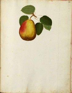 vintage printable pear