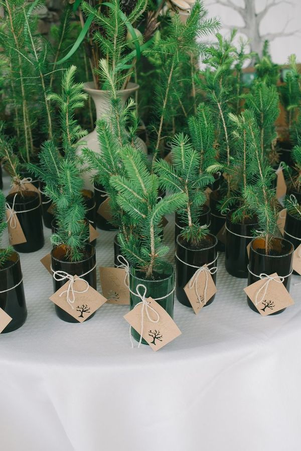 Planted Evergreen Trees: Give your guests a favor to remember your wedding by forever with these DIY plantable evergreen favors. Not only are they eco-friendly, they'll make your reception venue smell heavenly.   10 Festive Holiday Wedding Favors You Can DIY or Buy