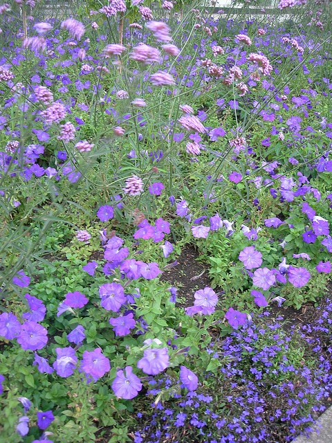 Purple bedding plants in a bed near St Paul's tube  This was after I met up with a group of cixen, all members of the sasha_lubetkin conference, met up for lunch at the Turkish restaurant TAS in The Cut and then went on to Tate Modern.    Then I took a