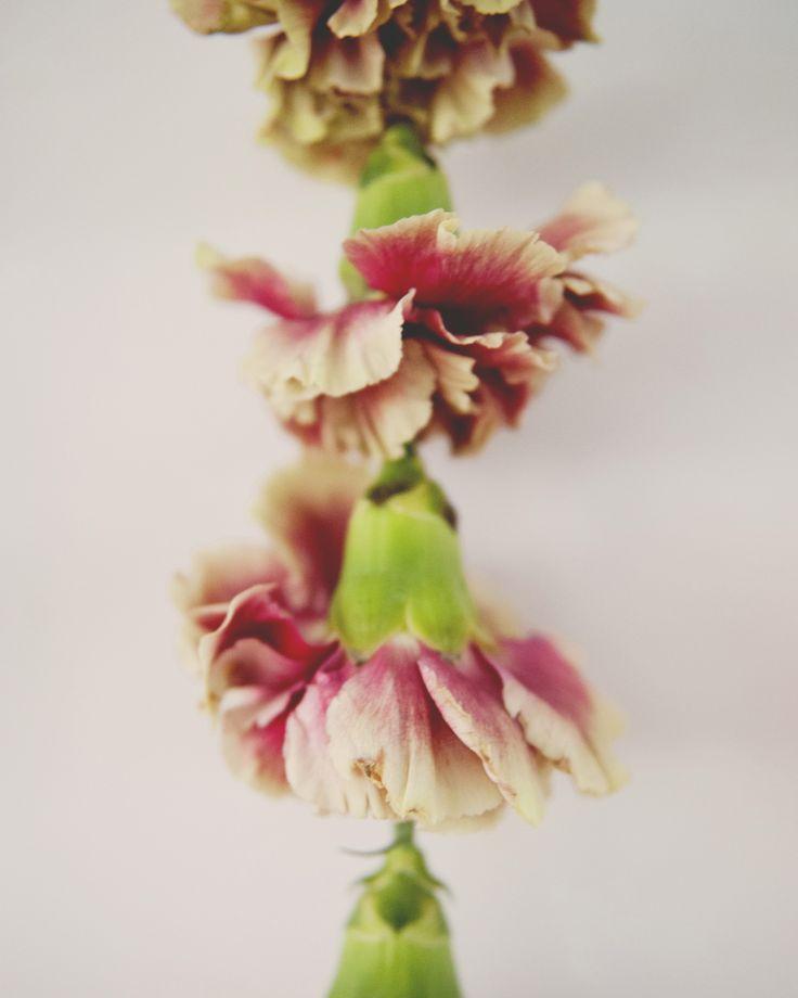 Diy Flower Garland: DIY FLOWER GARLAND WALL HANGING