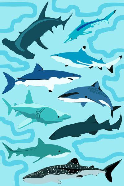 Sharks by Raffles Bizarre. Pediatric Dental World - pediatric dentist in Highland Village, TX @ www.pediatricdentalworld.com