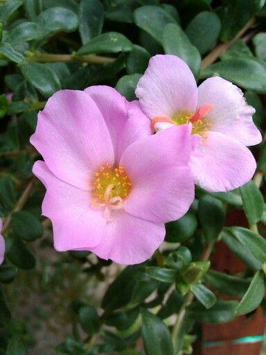 Little flowers.