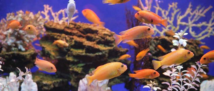 Find the right 55 Gallon Aquarium to suit your needs. Read our SeaClear, Deep Blue Professional, Top Fin, Aqueon, Starfire and Marineland tank shortlist.