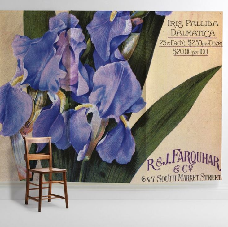 U0027Iris Pallida Dalmaticau0027 Mural   New York Botanical Garden Collection From  £60 Per Part 93