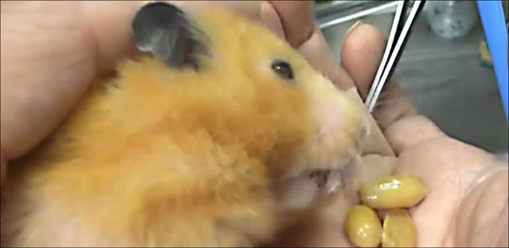 20 Minuten - Auch ein Hamster hat Angst vor dem Zahnarzt - Viral