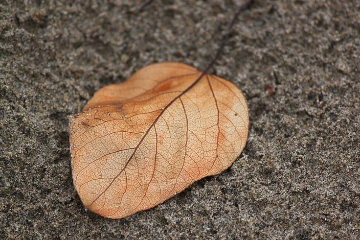 #leaf #subiwilksphotography